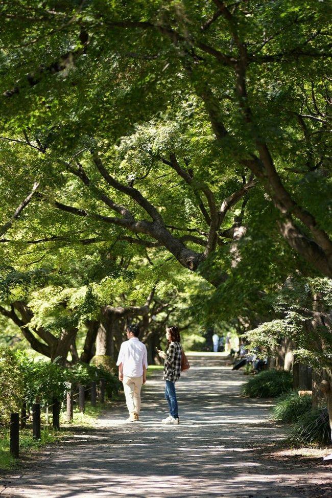 小石川植物園 Relaxing Taking Photos Hello World Nikonphotography EyeEm Best Shots Tokyo EyeEm Best Shots - Landscape