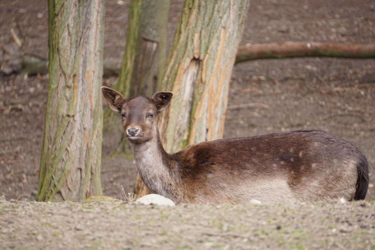 Beautiful stock photos of hirsch, Animal Head, Animal Themes, Branch, Day