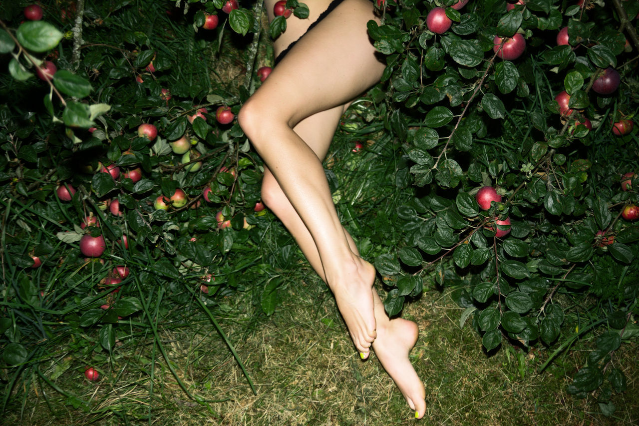 The Cider House Legs Apples Cider Female Fitness Girl Grass Green Leaves Legs Linas Was Here Nature Summer Woman Fresh On Market 2017