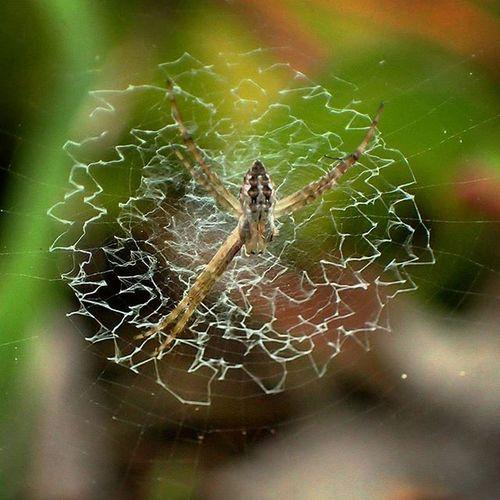 Differentpatterns Spider Web Missing Leg Spider Garden Photography Spiderworld Arachnophobia