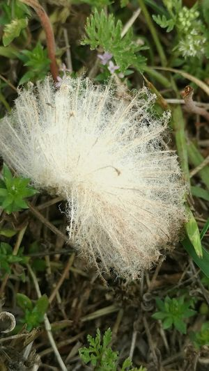 Seeds Photography Nature No People Beauty In Nature Shapeandtexture Findings Nature_collection
