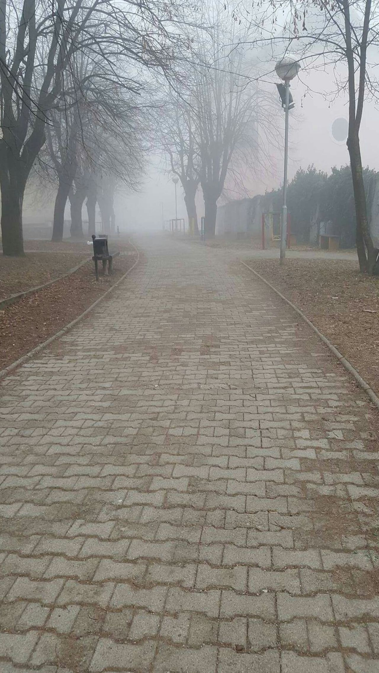 No Filter, No Edit, Just Photography Low Angle View Just Photography Landscape Foggy Morning Way To Class Love Croatia Trees Foggy Beautiful The Great Outdoors With Adobe Beauty In Nature Slovenia One Day ❤ The Path Less Traveled By Pointer Footwear