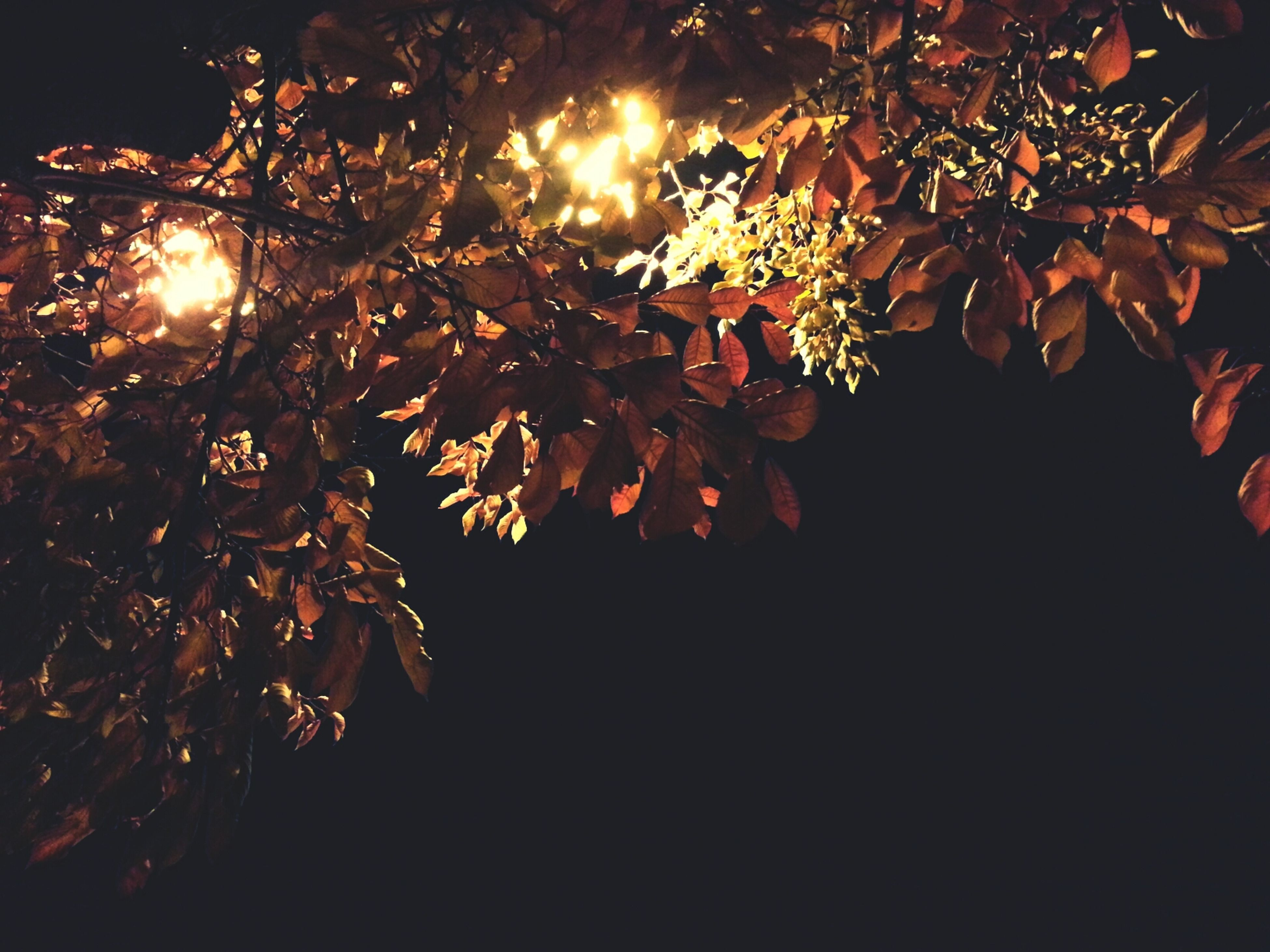 night, tree, growth, branch, nature, beauty in nature, low angle view, leaf, tranquility, illuminated, dark, no people, sun, sunlight, outdoors, plant, glowing, silhouette, close-up, clear sky