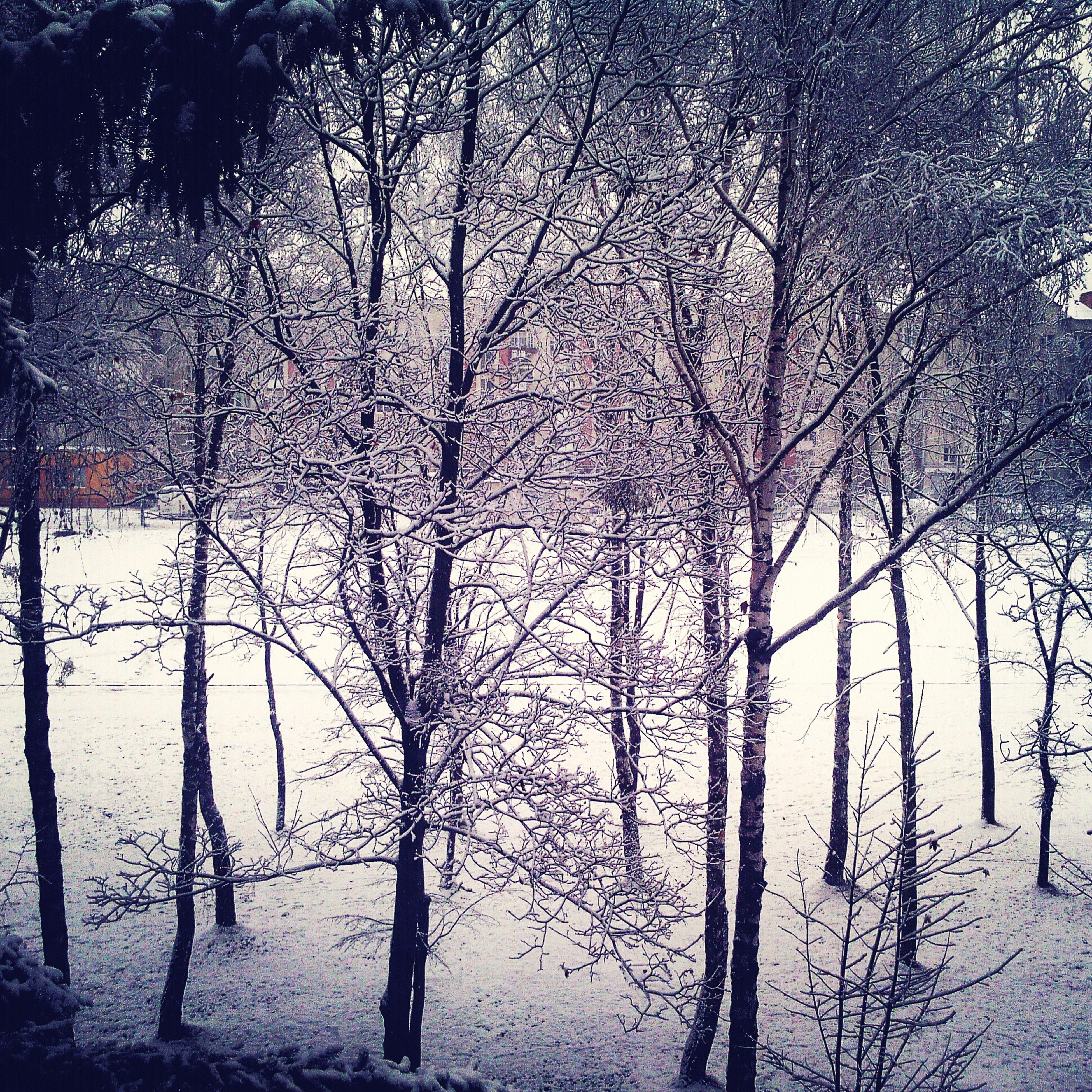 Snow Day ❄ First Eyeem Photo