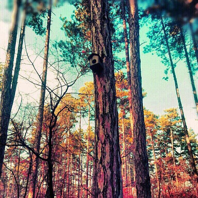 Tree #forest #birdhouse