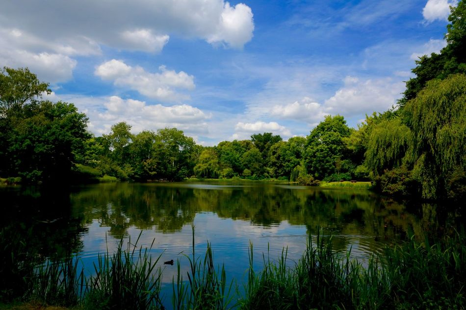 Beauty In Nature Calm Cloud Cloud - Sky Grass Green Green Color Growth Idyllic Lake Lakeshore Nature No People Non Urban Scene Outdoors Park Skaryszewski Plant Reflection Scenics Sky Tranquil Scene Tranquility Tree Warsaw Water