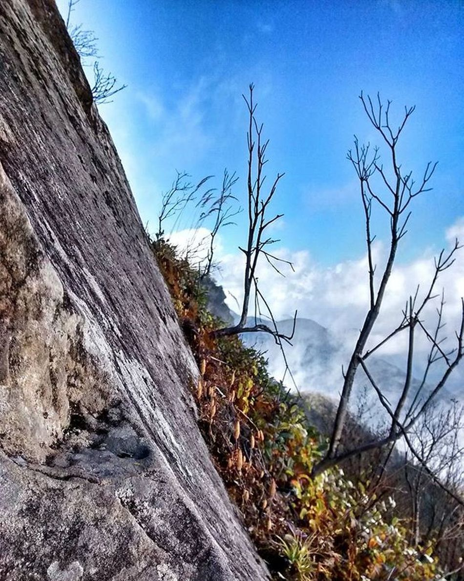 Mt. Japfu peak. November 14, 2015. 2,968 mtrs and freezing cold. The last bit was really really really scary. Couldn't go all the way to the top, probably 20 ft short of the Cross at the peak. I will go again. And I will reach the top. (Whether I can make it back down or not is an entirely different conversation 😁) This picture shows you the incline angles we had to climb toward the top. Insane. Japfü Peak Trek Climb IndiaTrail Nagaland Challenge Mountain WalkNagaland ScaryAsHell Planning another attempt in February 2016.