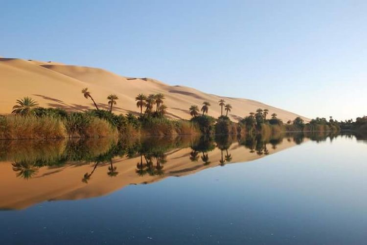 Ouergla -Algérie Nature Landscape Water Reflection Sand Dune Tree Sky Outdoors No People Day Sahara EyeEm Nature Desert Sahara Of Algeria Sahara Desert Saharadesert