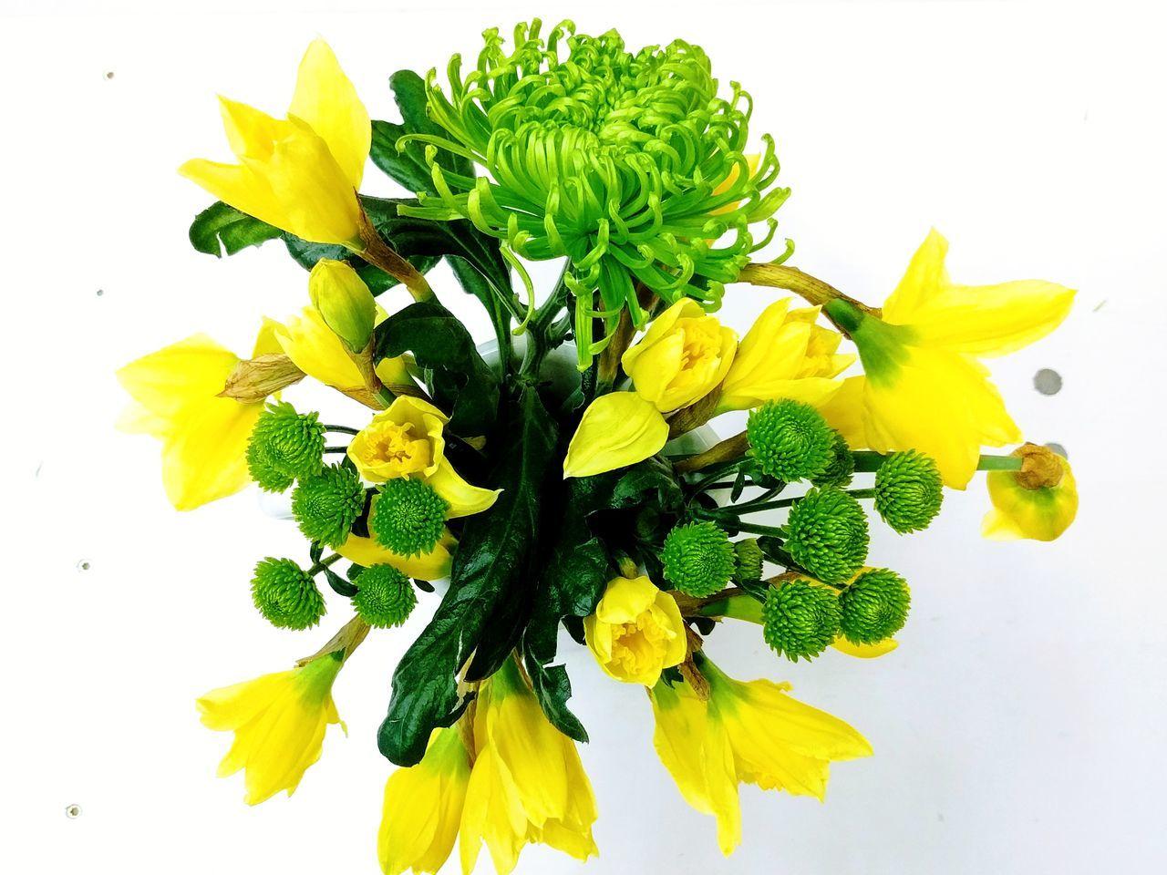 Yellow Studio Shot Flower Head Easter Easter Ready Flower