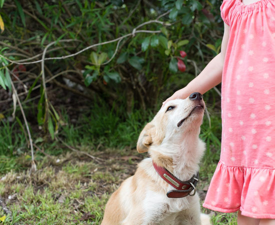 Cropped view of little girl patting her dog Animal Themes Child Day Dog Domestic Animals Friendship Girl Holding Human Body Part Human Hand Low Section Mammal One Animal One Person Outdoors People Pets Real People Retriever Sitting