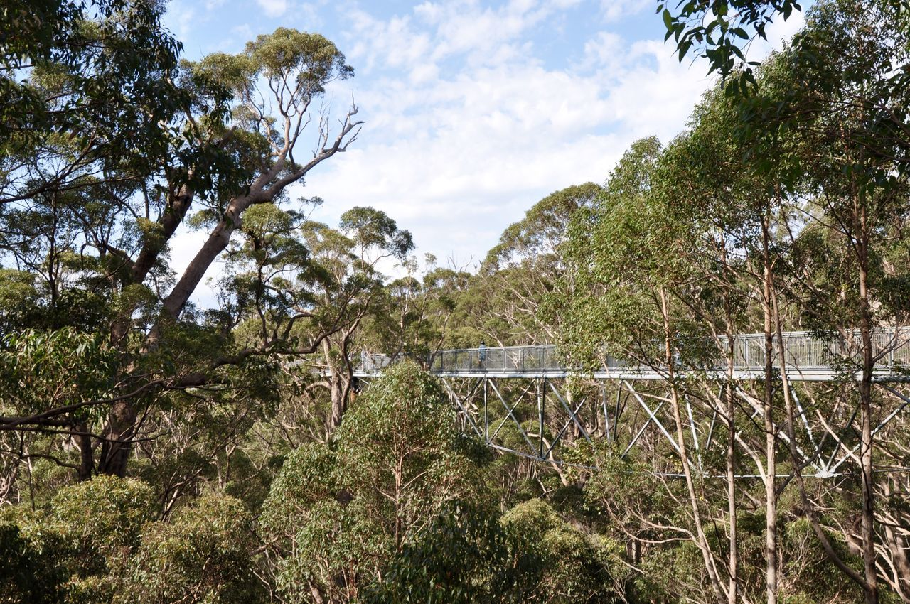 Elevated pedestrian walkway through the tree canopy in the Valley of the Giants tingle tree forest in Western Australia. Beauty In Nature Branch Bridge Canopy Cloud - Sky Forest Green Growing Growth Lush Foliage Nature Outdoors Park Remote Scenics Sky Solitude Tingle Tree Tranquil Scene Tree Tree Top Walk Valley Of The Giants Walkway Western Australia WoodLand