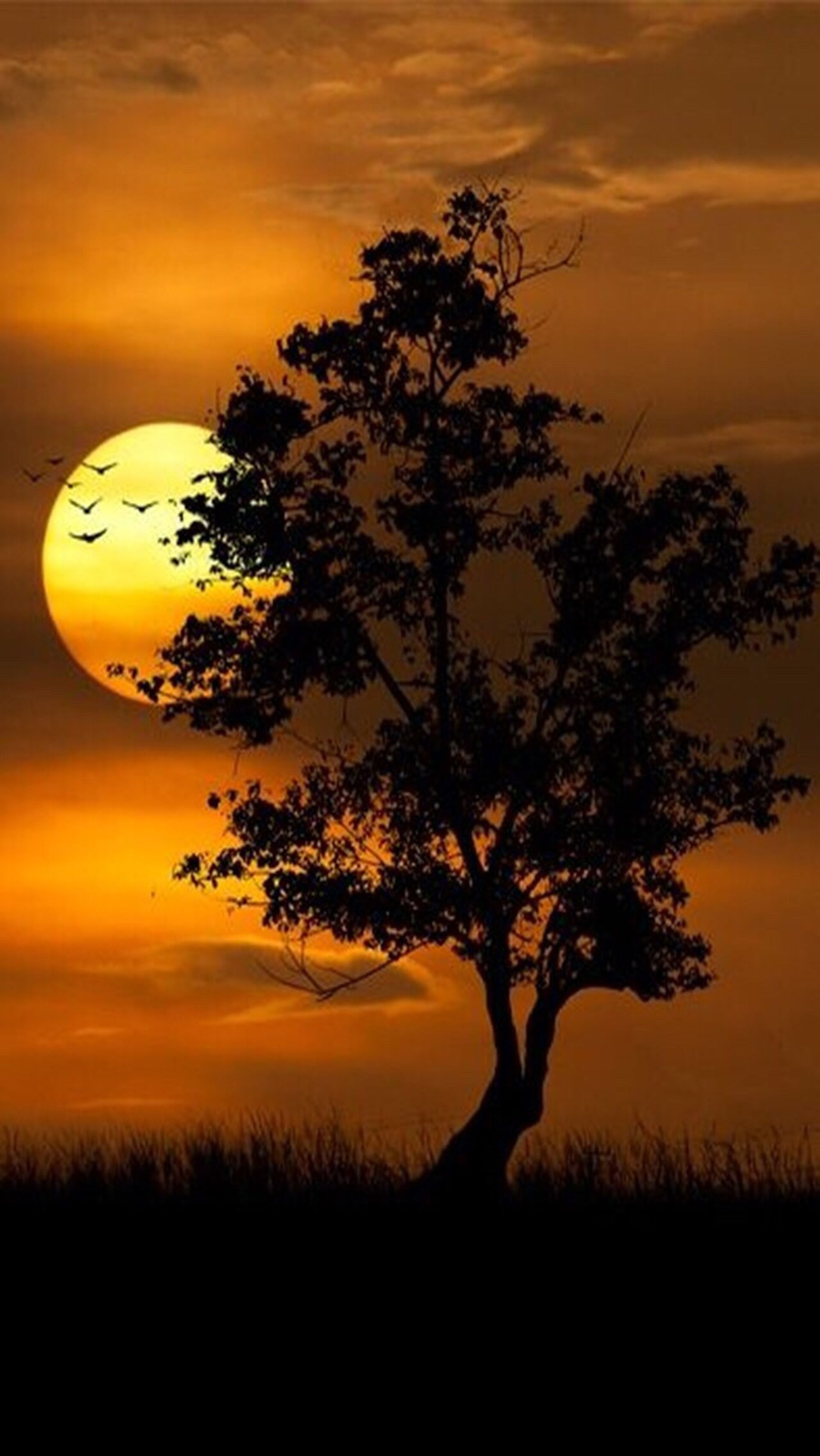 sunset, orange color, silhouette, scenics, beauty in nature, tranquil scene, tranquility, sky, tree, nature, idyllic, landscape, sun, dramatic sky, field, growth, cloud - sky, majestic, outdoors, no people