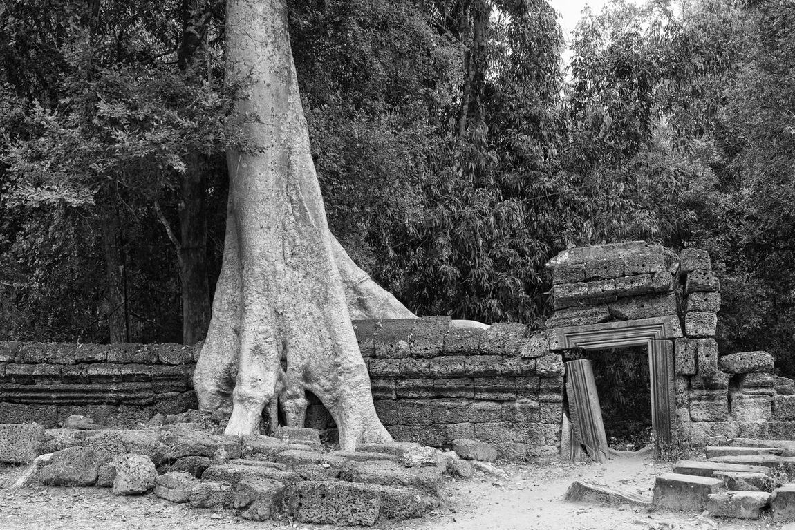 Ta Prohm ASIA Beauty In Nature Black And White Buddhist Temple Bw Cambodia EyeEm Best Shots - Black + White EyeEm New Here Forest Growth Landscape Nature No People Outdoors Resist Roots Ruins Ta Prohm Temple The Secret Spaces Tree Tree Roots  Tree Trunk Tree Trunk EyeEm Diversity Art Is Everywhere The Architect - 2017 EyeEm Awards The Great Outdoors - 2017 EyeEm Awards
