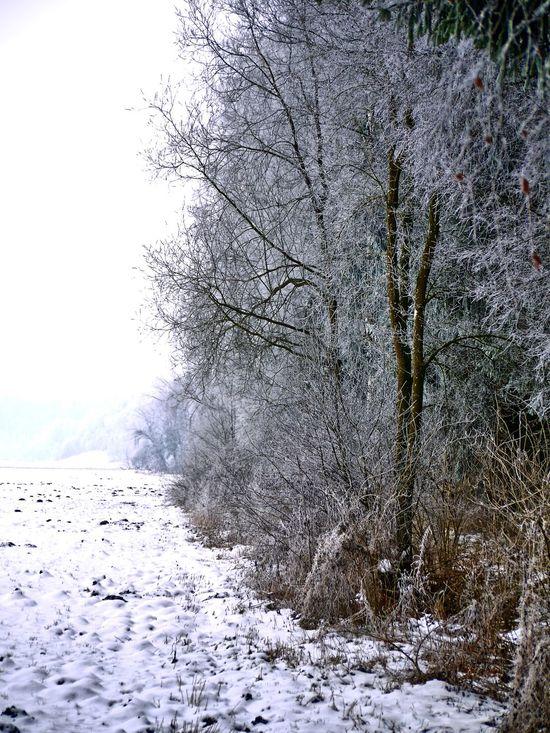 Am Wegrand Bäume Outdoors Tree Einsamkeit Nature Nature Nebel No People Outdoors Schwabenland Snow Tree Wegrand Wintertime Wintertrees