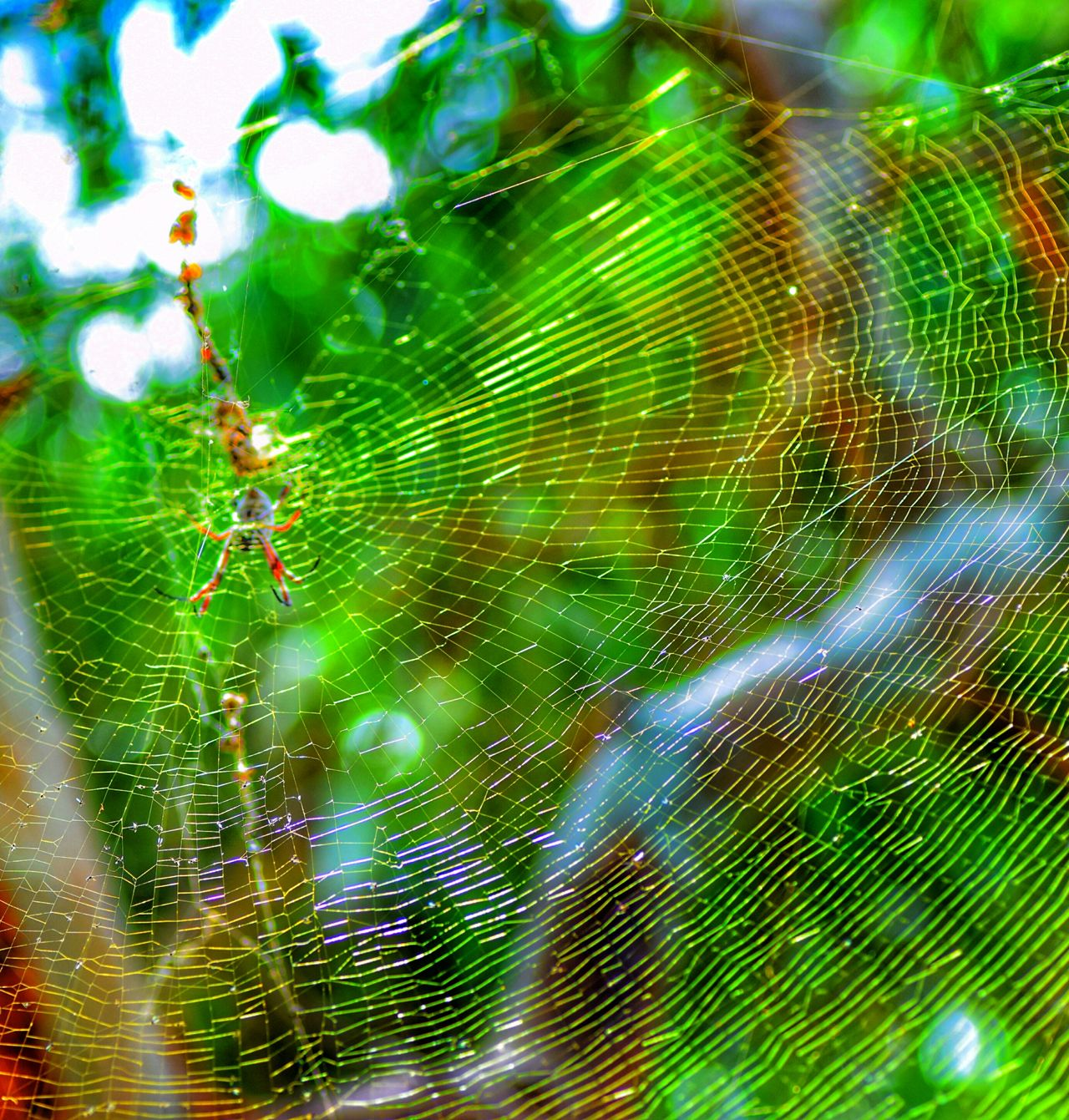 Marden Reserve Marden South Australia. Close-up Spider Web Nature Animal Themes Spider No People One Animal Outdoors Fragility Day Beauty In Nature Animals In The Wild Web Backgrounds Insect EyeEm Nature Lover Eye4photography  Taking Photos Eye Em Nature Lover Eyem Gallery Macro_collection Nature Photography Beauty In Nature Nature_collection Close Up Photography