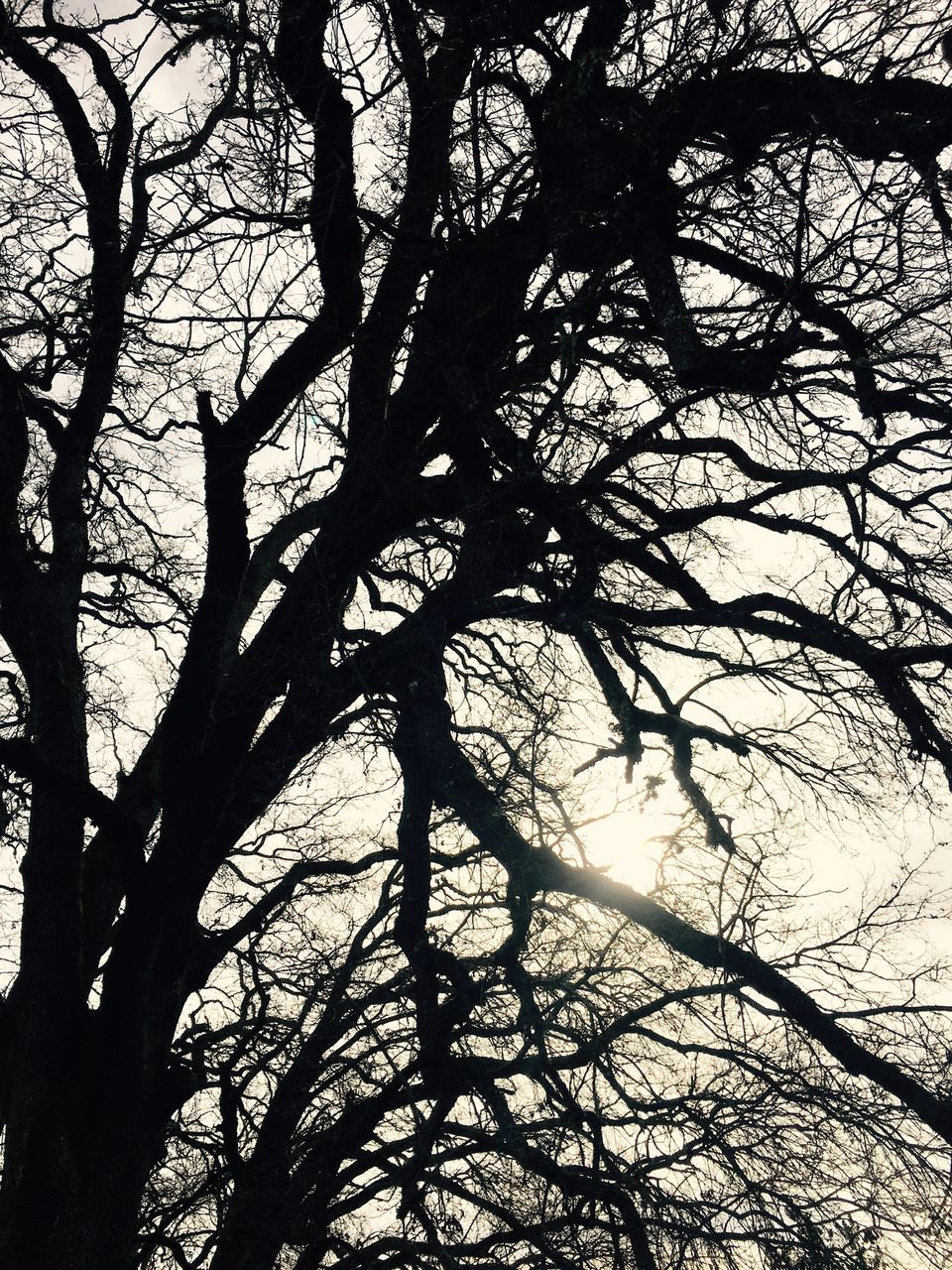 tree, branch, nature, beauty in nature, low angle view, no people, tranquility, bare tree, day, outdoors, tree trunk, scenics, sky
