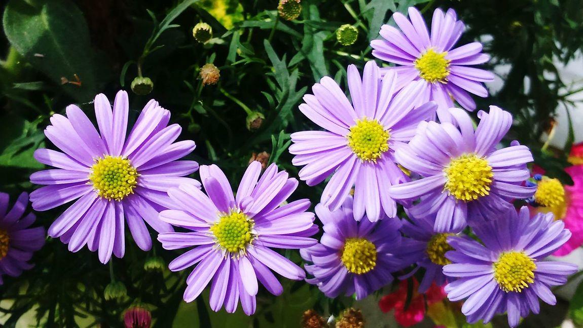 Parme discret .......💜 Beauty In Ordinary Things La Vie Et Belle ❤ Today:-) Nature Makes Me Smile