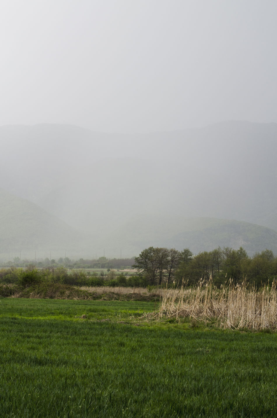 Agriculture Beauty In Nature Beauty In Nature Bulgaria Day Field Fog Foggy Grass Green Color Landscape Mist Mountain Nature No People Outdoors Rural Scene Scenics Sky Spring Storm Tranquil Scene Tranquility Travel Tree