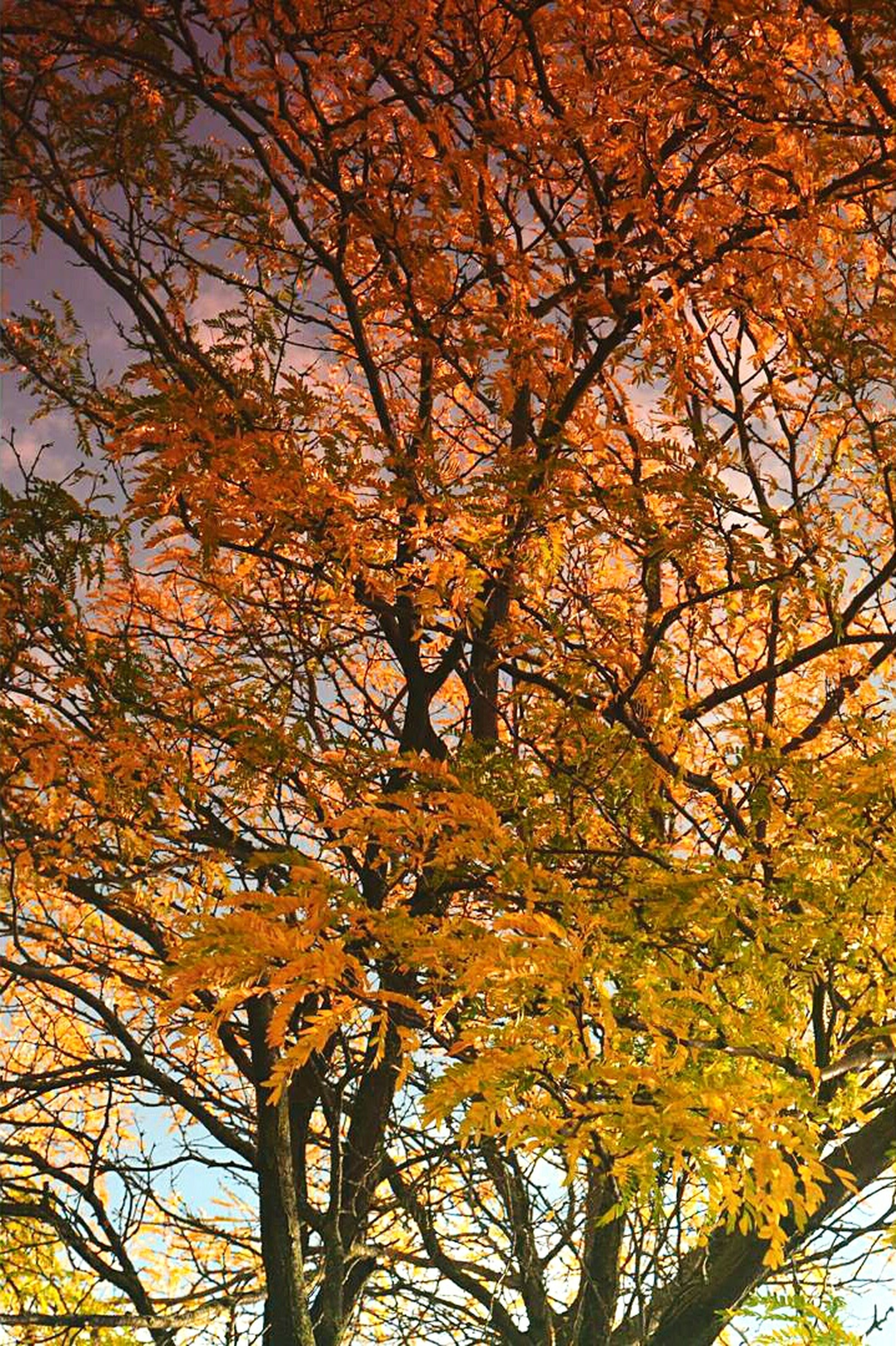 tree, autumn, change, branch, season, tranquility, yellow, beauty in nature, nature, orange color, scenics, growth, tranquil scene, leaf, idyllic, outdoors, water, no people, low angle view, tree trunk
