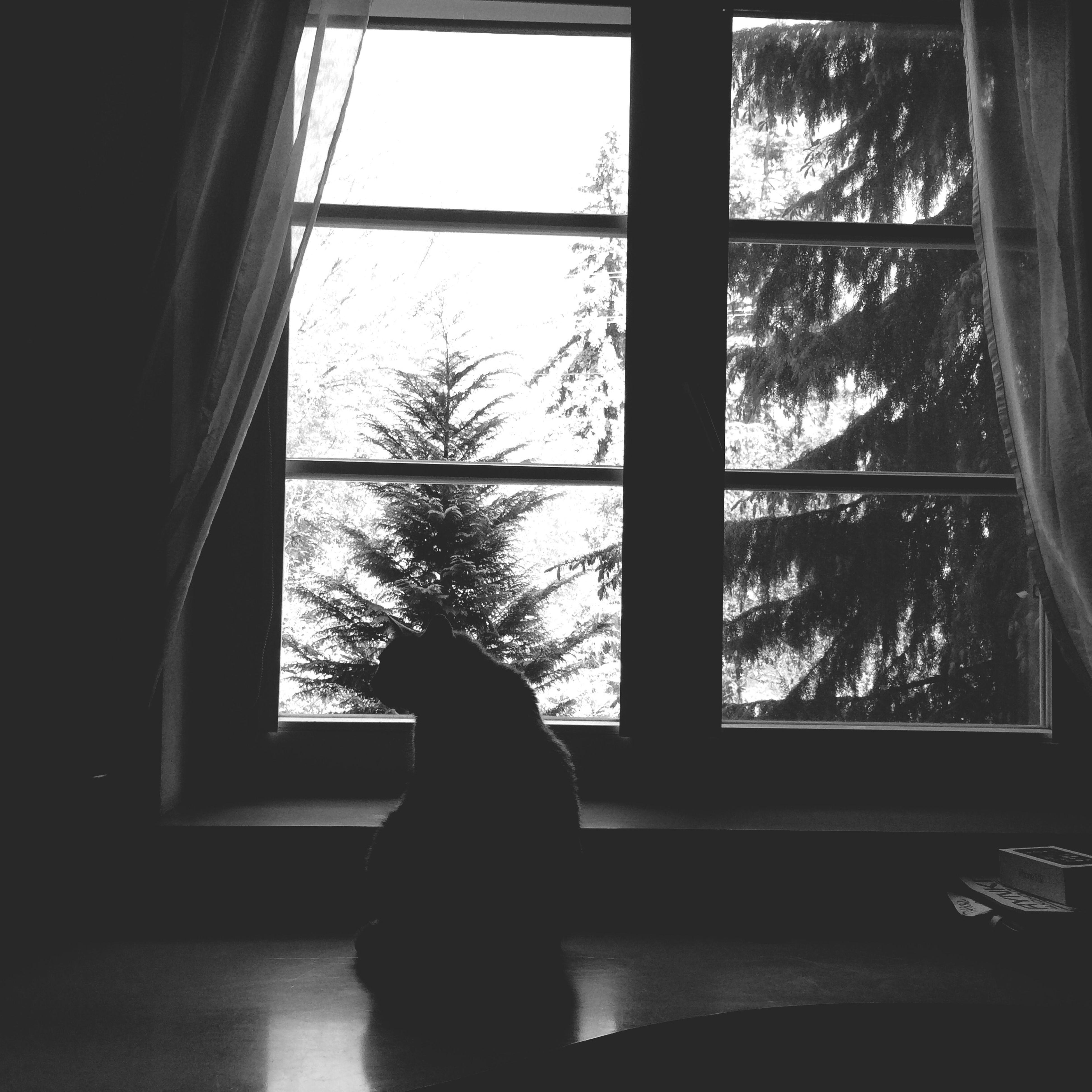 window, indoors, transparent, glass - material, looking through window, silhouette, tree, home interior, window sill, dark, glass, curtain, day, sunlight, reflection, sitting, house, open
