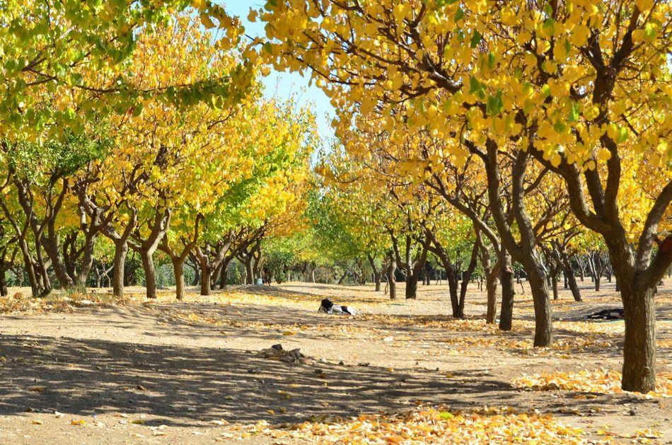 Tree Fotography fotoğrafaşktır