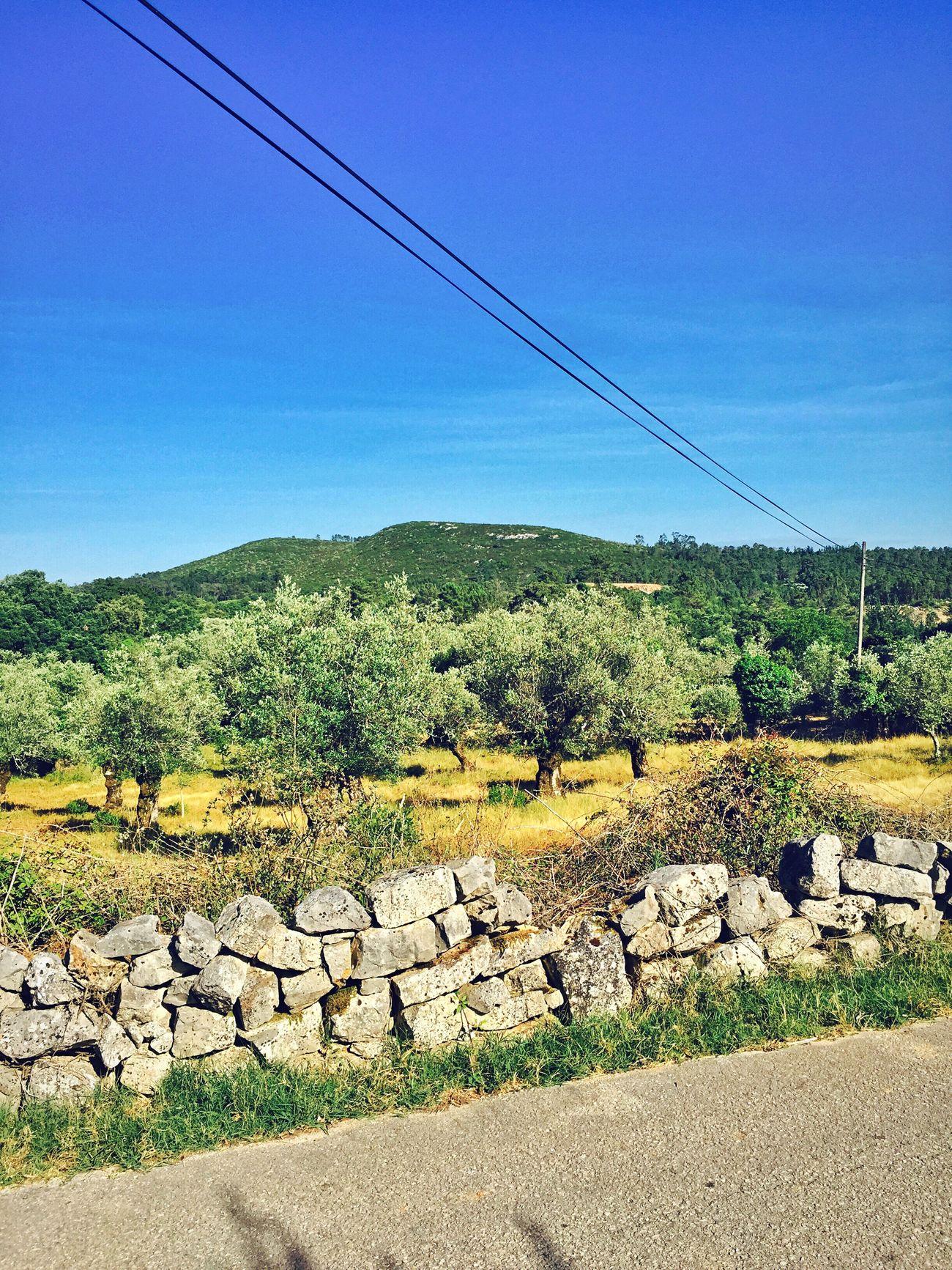 Hollidays Portugal 2015  First Eyeem Photo