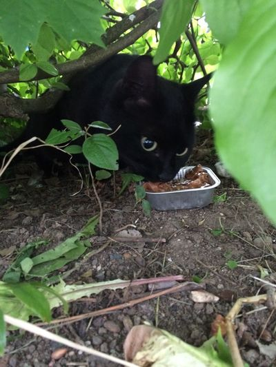 Pets Corner feeding my straying friend with no home 😊