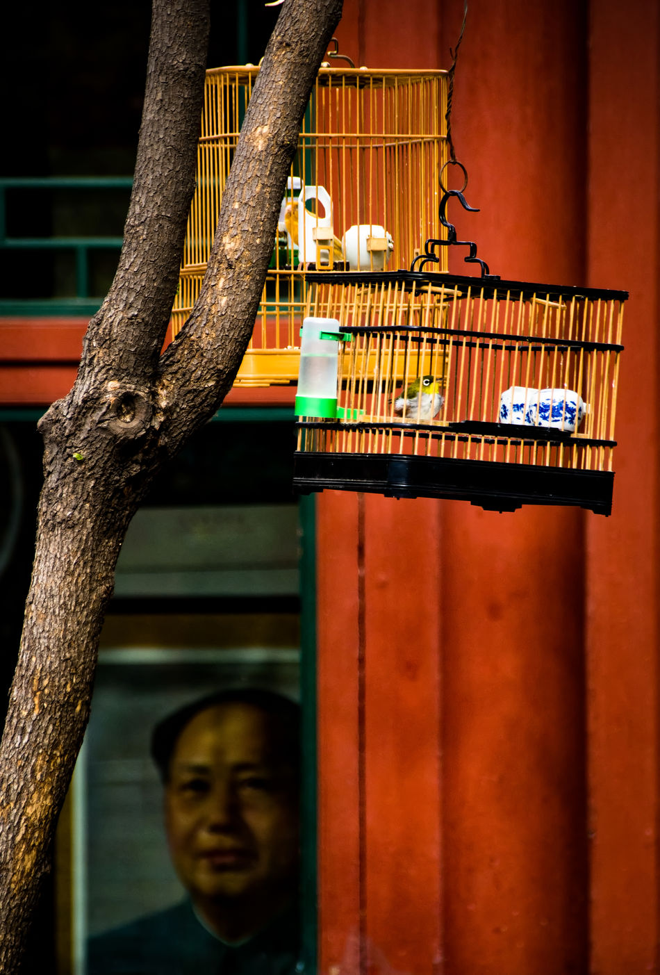 Architecture Backgrounds Backyard Birdcage Birds Of EyeEm  Capture The Moment Check This Out Chinese City Life Close-up Day Eye4photography  Eyeemphoto Eyeemphotography Eyemphotography From My Point Of View Mao Memories Old Times Outdoors Part Of Scenics