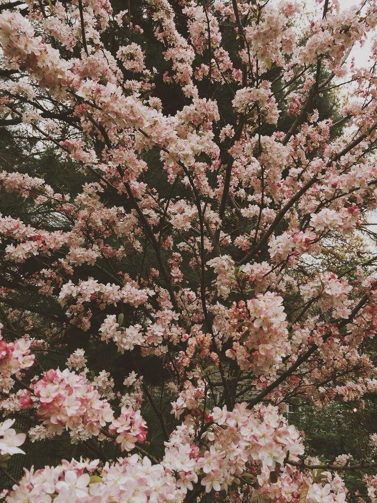 Una explosion de amor / an explosion of love Smile Flowers Love Is Everywhere The Treasures Of Earth Natural Beauty Rosa Vida Rosa Te Extraño Mi Vida