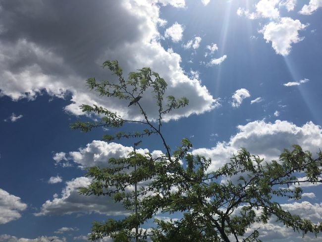 June 5, 2016 / Fargo, North Dakota Beauty In Nature Cloud Cloud - Sky Cloudy Day Fargo Growth Idyllic Lens Flare Low Angle View Nature No People North Dakota Outdoors Scenics Sky South Fargo Spring Sun Sunbeam Sunlight Sunny Tranquil Scene Tranquility Tree
