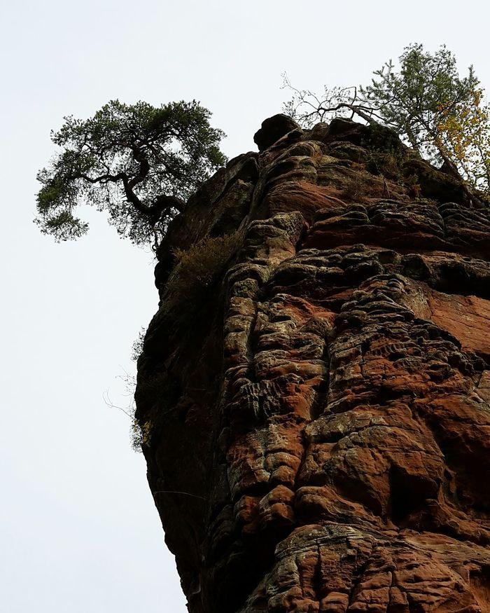 Fels Dahner Felsenland Rock Natural Beauty Tree And Sky My Year My View Upward View Sandstone Redrock Vegetation Pfälzerwald