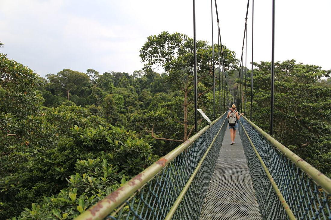 Beauty In Nature Bridge - Man Made Structure Macritchiereservoir Nature Outdoors Suspension Bridge Tree Tree Top Walk