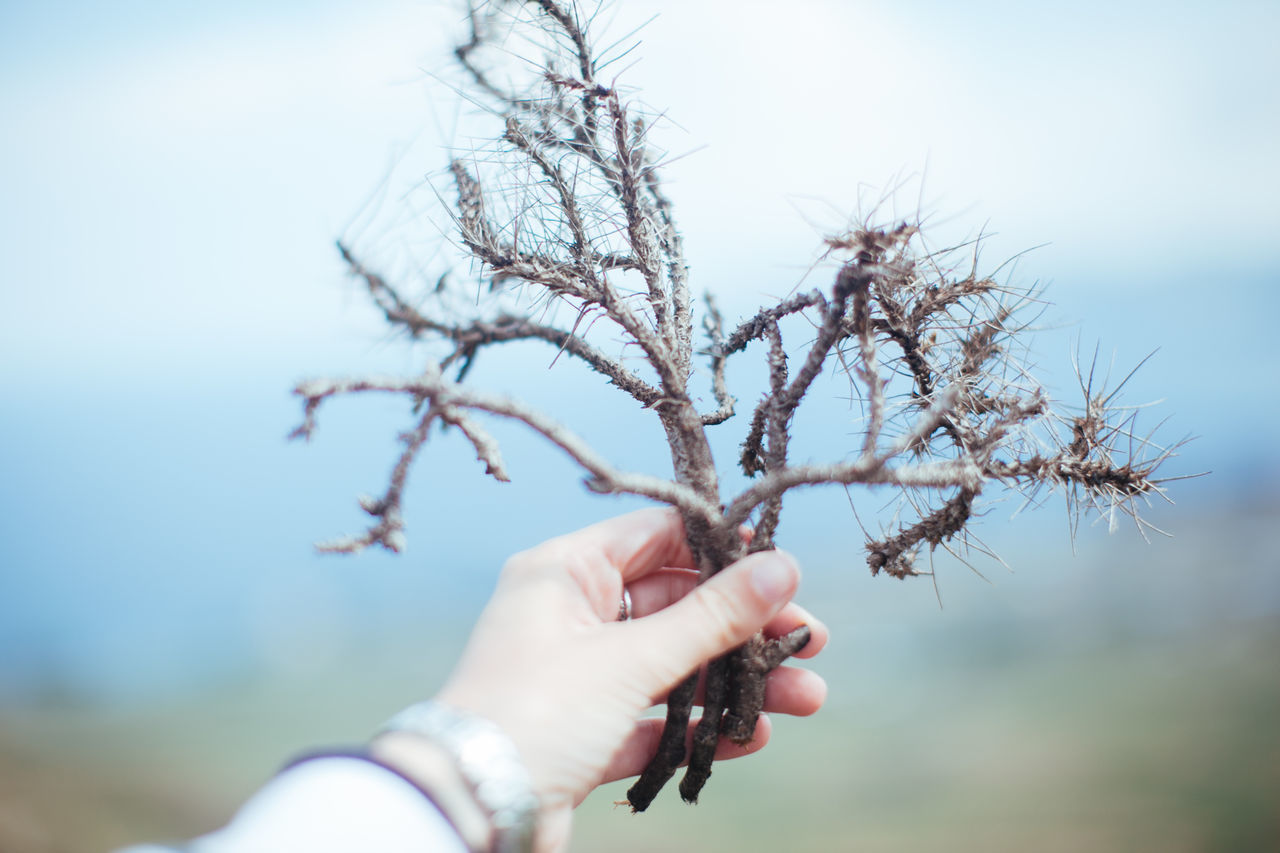 Beauty In Nature Branch Freshness Holding Human Hand Nature Sky Stick