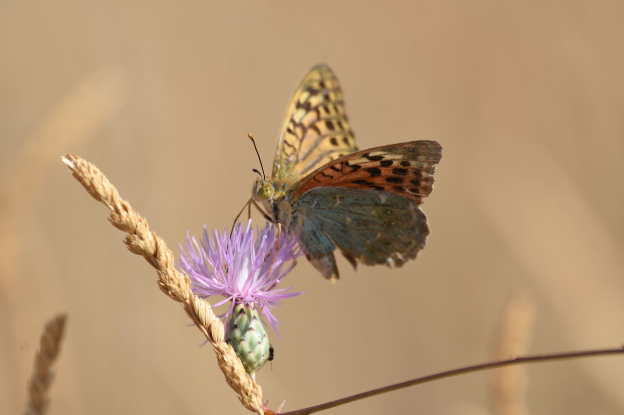 Beautiful stock photos of butterfly, Insect, animal Markings, animal Themes, animal Wing