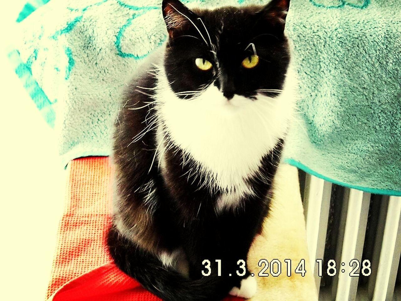 Cat♡ Meine Fienchen