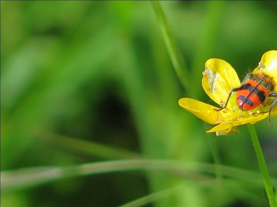 Macro Photography Green Bug Nature Photography Beautiful Nature Bug On A Flower Naturelover