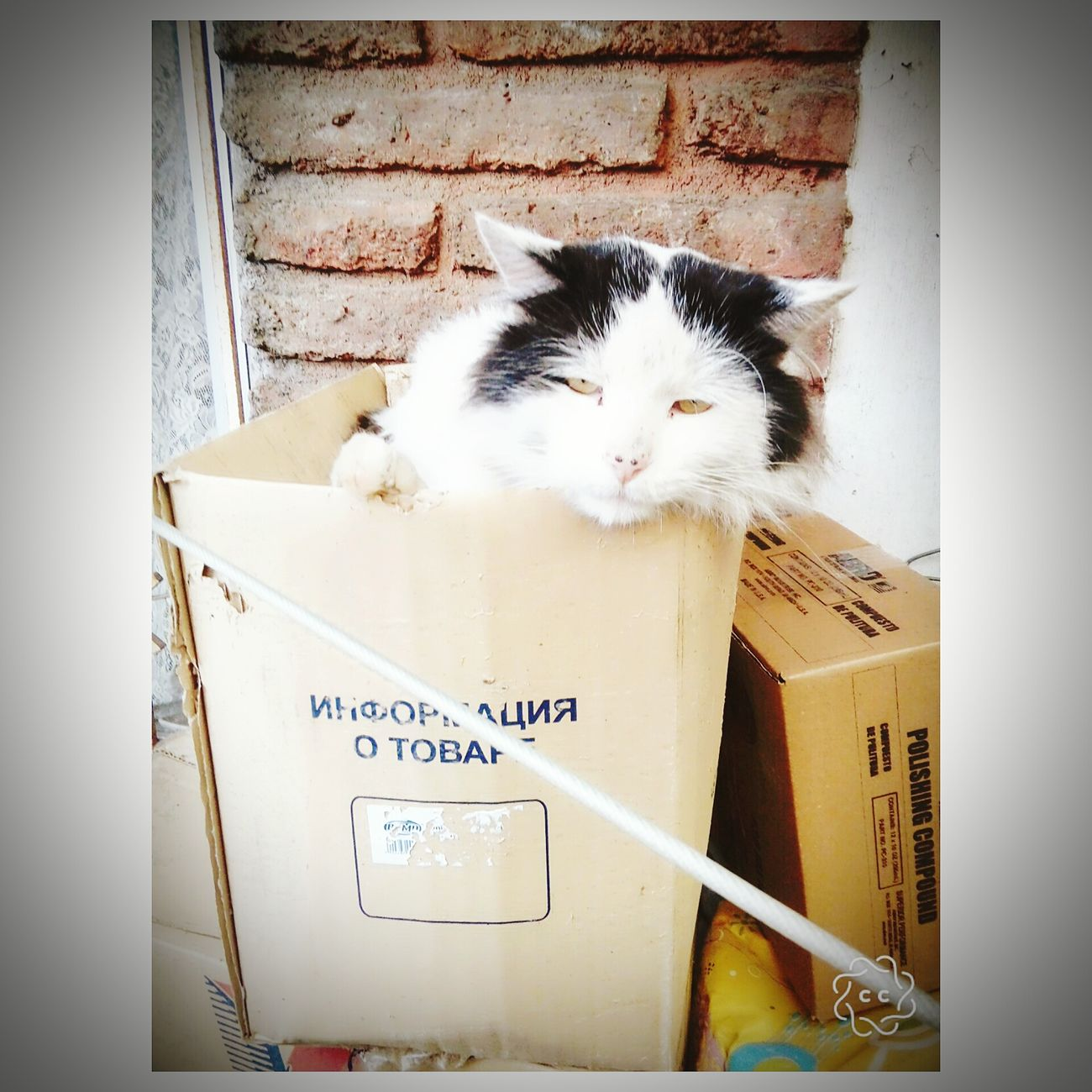 Cats Mascotas 🐶 Evans Santiago De Chile First Eyeem Photo