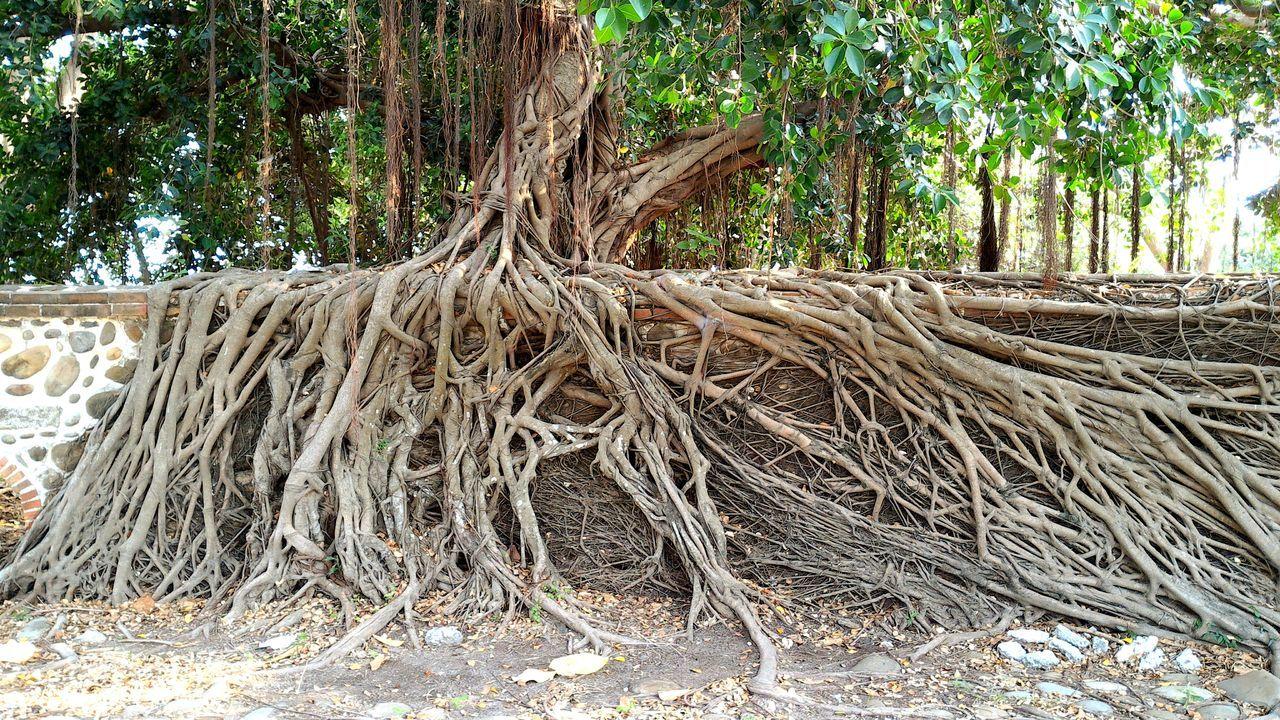 Trees Old Trees