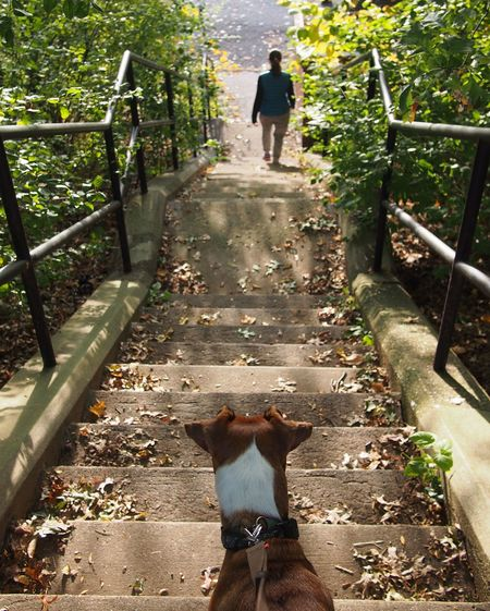 Neighborhood Walking Stairs Dog