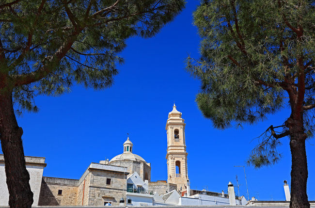 Campanile of Chiesa madre di San Giorgio Martire, Locorotondo, Apulia, Italy Architecture Bell Tower Bell Tower - Tower Blue Branch Building Exterior Built Structure Chiesa Madre Di San Giorgio Martire Church City Life Clear Sky Façade Italy Locorotondo Low Angle View No People Old Town Outdoors Place Of Worship Puglia Religion Spirituality Tourism Town Tree