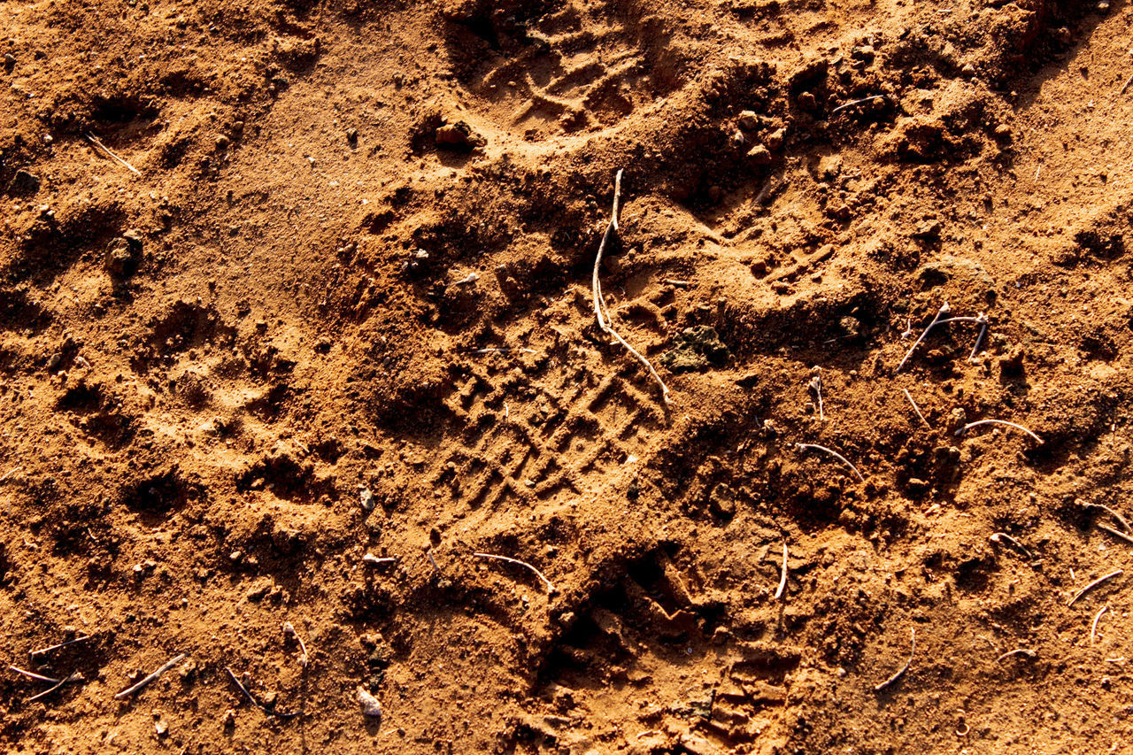 footprint, sand, high angle view, animal track, paw print, no people, track - imprint, pattern, full frame, brown, backgrounds, close-up, day, textured, nature, outdoors