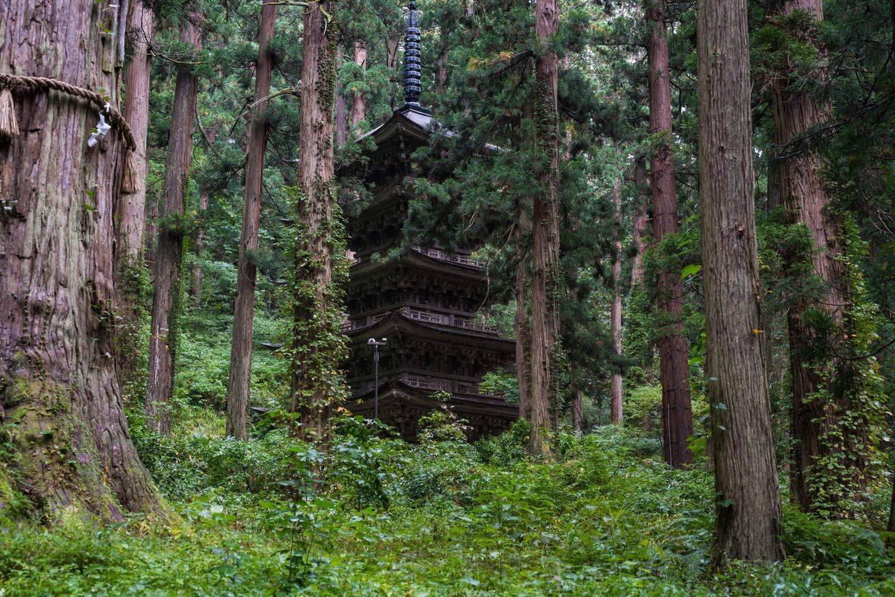 tree, forest, no people, nature, tranquility, travel destinations, day, tree trunk, architecture, outdoors, tranquil scene, wood - material, spirituality, green color, built structure, scenics, growth, building exterior, beauty in nature, ancient civilization