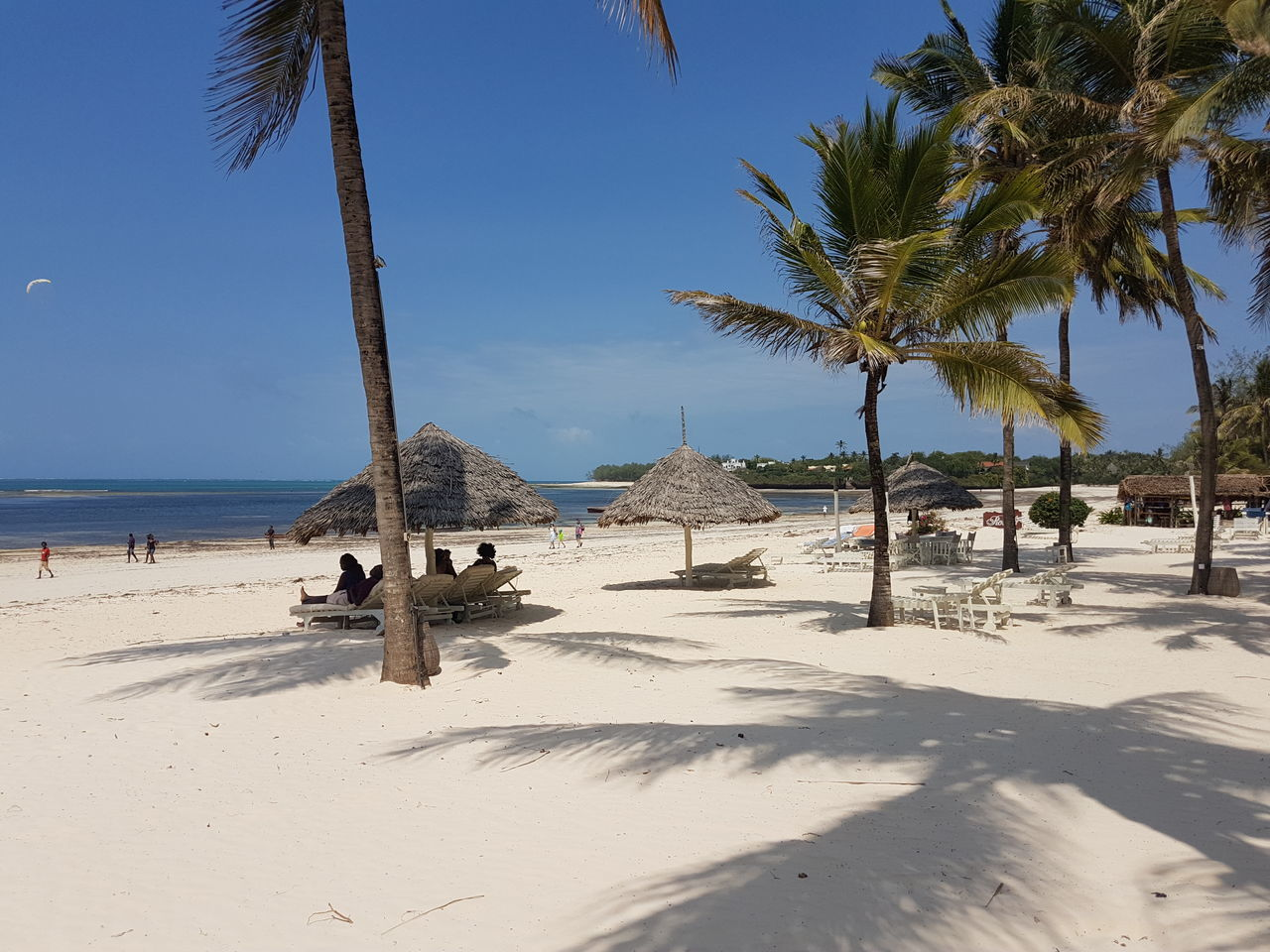 Malindi beach white sands Sand Beach Sea Sunny Tree Sky Sand Dune Shadow Tranquility Nature Palm Tree Clear Sky Outdoors Day Landscape Desert Summer No People Vacations Scenics