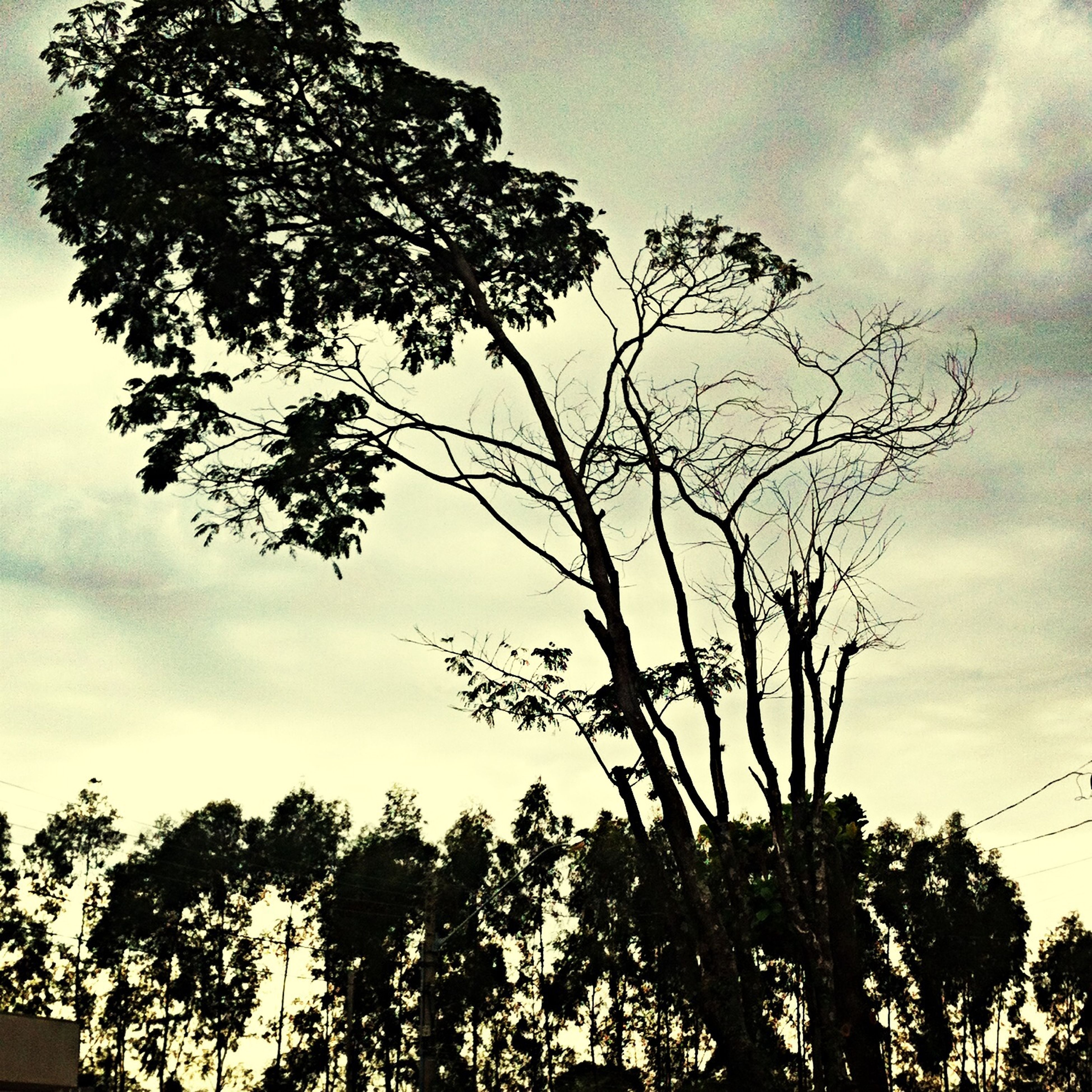 low angle view, tree, sky, branch, cloud - sky, growth, nature, tranquility, silhouette, cloudy, beauty in nature, cloud, scenics, outdoors, tranquil scene, no people, day, bare tree, tree trunk, high section