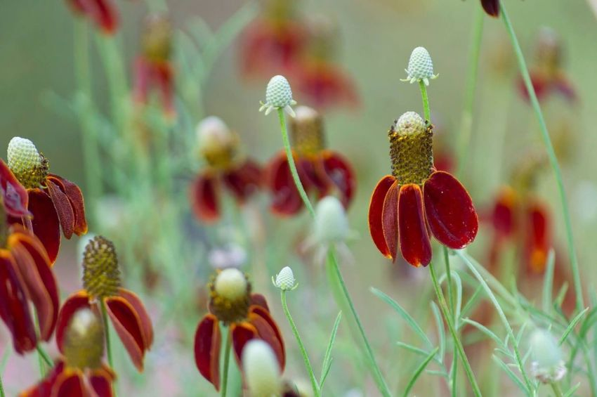 Wildflowers Growth Freshness Nature Beauty In Nature No People Focus On Foreground Plant Red Flower Close-up Day Outdoors Fragility Flower Head