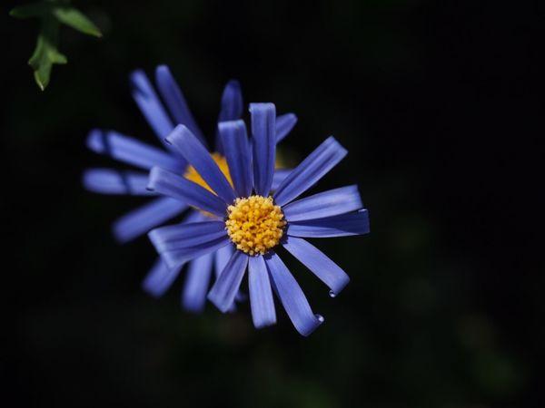 Flower Beauty In Nature Nature Blue Close-up EyeEm Best Shots EyeEm Nature Lover