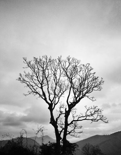 Tree Naturelovers Sky_collection Nature Nature_collection Nature_perfection EyeEm Nature Lover Monochrome Monochromatic Monochrome_Monday Brasil Brazil Sky Arvore Clouds Clouds And Sky Black And White Blackandwhite Picoftheday Photography Photographer