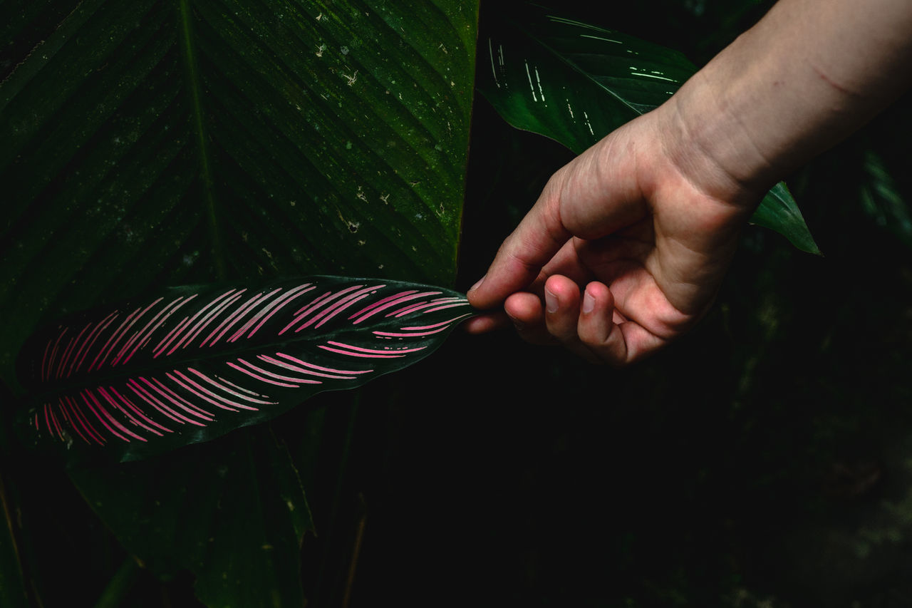 Adult close-up day Hands human body part human hand jungle leaf Love Mexico Nature photography nature_collection one person outdoors Palm tree people Plant scenics Travel Photography xilitla