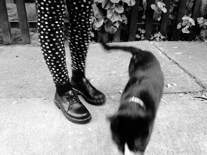 Blackandwhite Cat OpenEdit Monochrome
