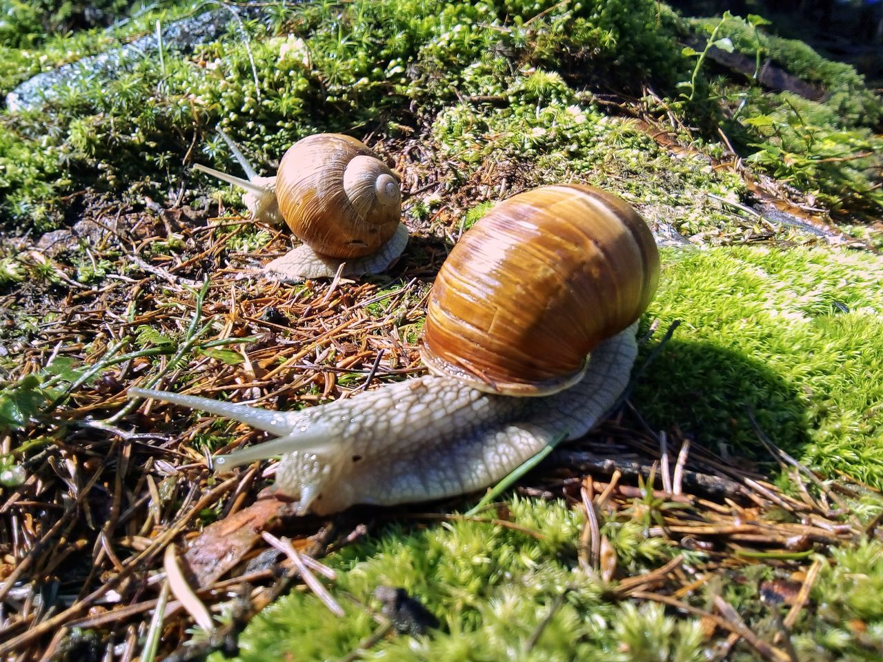 Snail Animal Shell Nature Outdoors Animal Themes Animals In The Wild Grass High Angle View Moss & Lichen Moss Summer Day Beauty In Nature Animal Wildlife Wildlife Animals In The Wild Nature Tranquility Wildlife & Nature